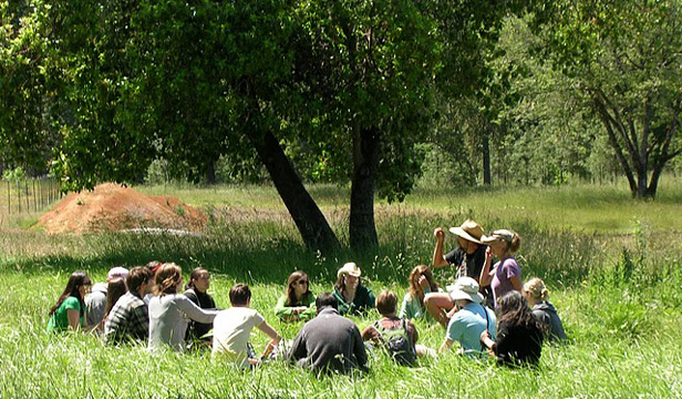 Students discuss herbs in meadow