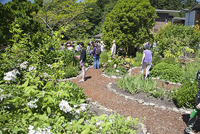 Patrons enjoy the Bastyr University Medicinal Herb Garden.