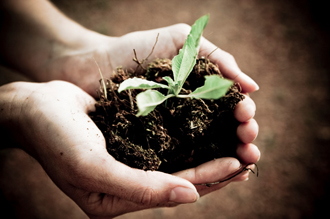 Hands holding soil and a small plant.