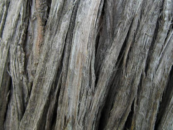 Close-up of cedar bark