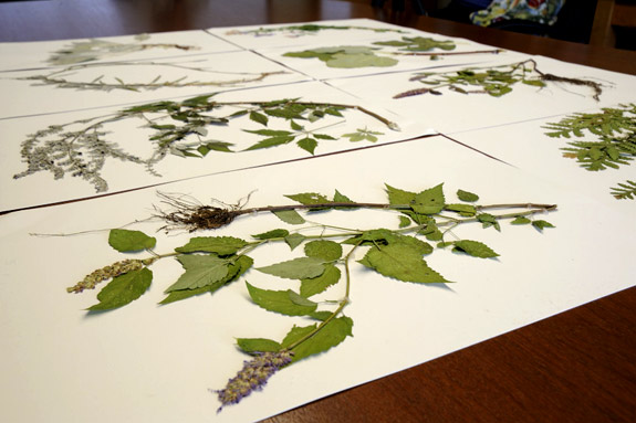 Plants specimens on table