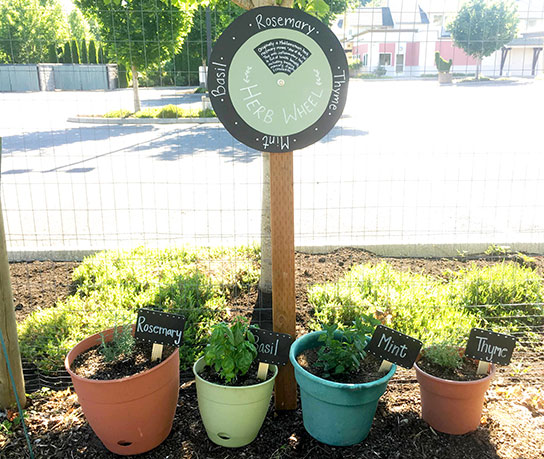 Herbs in pots with herb wheel