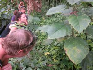 Students examine Costa Rican stinging nettle. Photo courtesy Jenn Dazey.