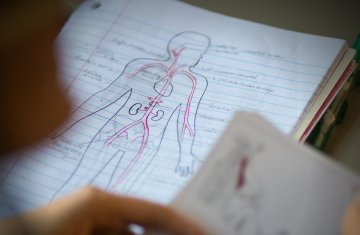student's human anatomy notes