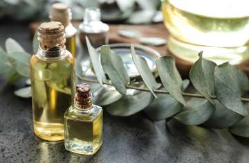Natural Benefits of Eucalyptus