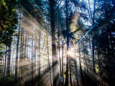 Sun rays shine through the trees on the Kenmore campus