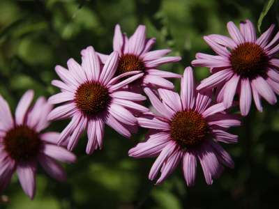 up-close view of purple flowers
