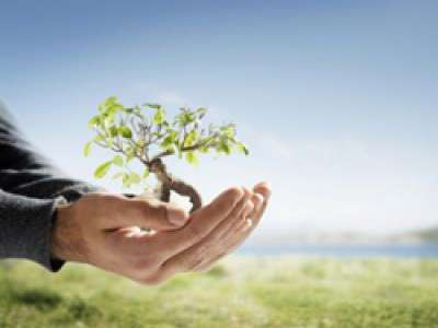 Photo illustration of a tree growing in open hands