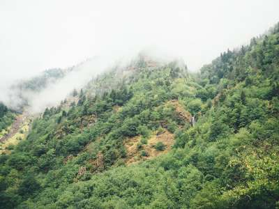 Appalachian Mountain trip for botanical medicine