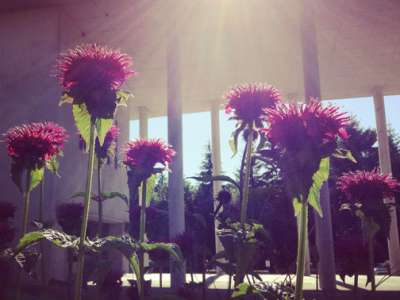 A ray of sun over the pillars shines on some flowers.