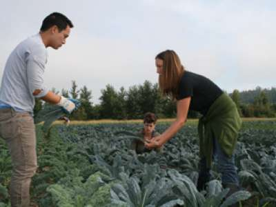 Lisa Harper shows volunteers how to harvest lacinato kale.