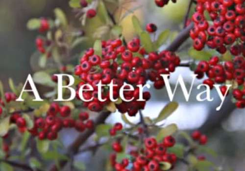 Red Berries Behind ' A Better Way' slogan