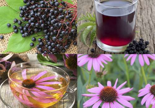 Elderberry and Echinacea plants and teas