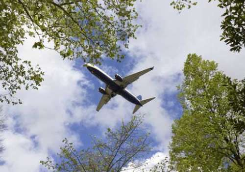 A jet plane in the sky bordered by tree branches