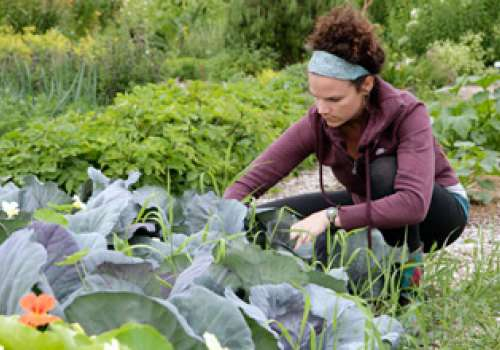 Student Ashley Ayers works in the Bastyr Medicinal Herb Garden.