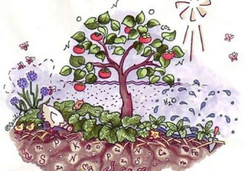 Illustration of a tree with plants growing underneath it.