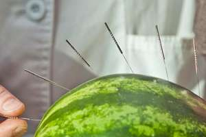 Acupuncturist places needles in watermelon