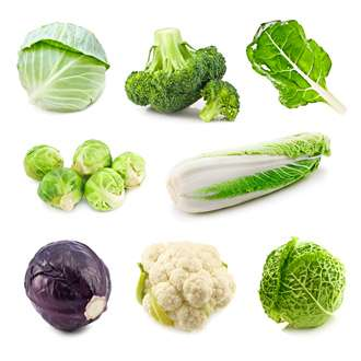 A variety of cabbages